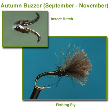Autumn Buzzer Insect Hatch and Fishing Flies / Fly