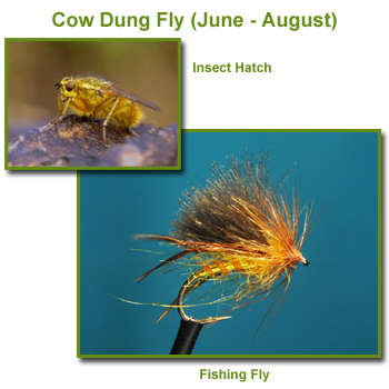 Cow Dung Insect Hatch and Fishing Flies / Fly