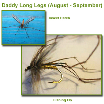 Daddy Long Legs Insect Hatch and Fishing Flies / Fly