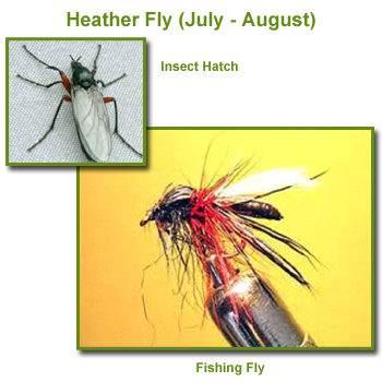 Heather Flies Insect Hatch and Fishing Flies / Fly