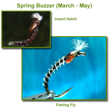 Spring Buzzer Insect Hatch and Fishing Flies / Fly